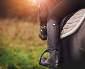 The influence of rider: horse bodyweight ratio and rider-horse-saddle fit on equine gait and behaviour: A pilot study