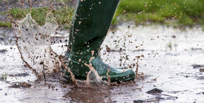 Wellie Survey Results … Just in Time for Christmas!